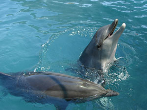 Dolphins in Alanya harbour